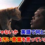 【キャプテン・マーベル】「痛いじゃないか」は英語で何と言う?実は汚い言葉を言っていた!?【アベンジャーズのセリフで英語の問題】